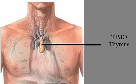 Il timoma e gli altri tumori del timo